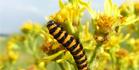 Icon Insektenanpassungen